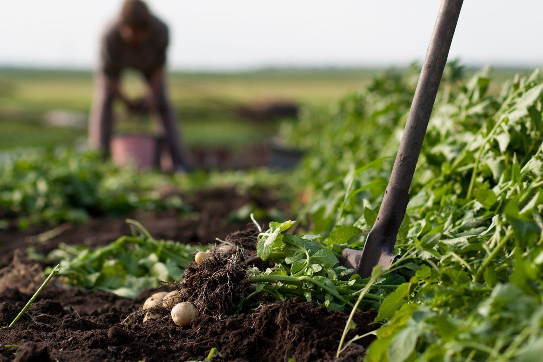 Honnington Farm Allotments
